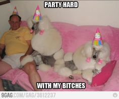 party hard. animal pics, poodl, party animals, animal pictures, birthday parties, hello kitty birthday, party hats, pet photos, animal party