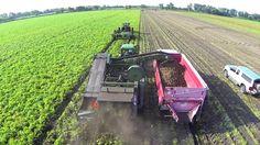 #BetterMade 2014 Potato Harvest