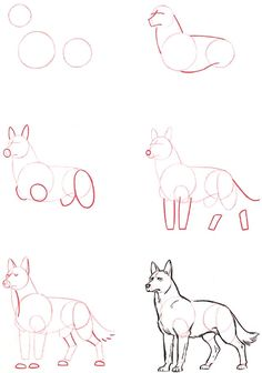 How to draw a wolf.