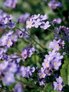 Forget-me-not forms a delicate-looking cloud of color in early spring, especially if grown at water's edge: http://www.bhg.com/gardening/flowers/perennials/flowers-for-wet-soil/?socsrc=bhgpin053014forgetmenot&page=11