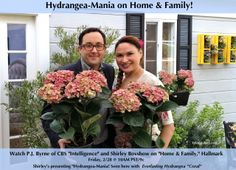 "Hydrangea-Mania"" garden segment on Home & Family tomorrow on Hallmark Channel.  Actor P.J. Byrnes of ""Intelligence"" (CBS) fell in love with these ""Coral"" Everlasting Hydrangeas, you will too!"