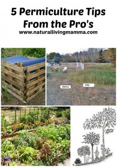 5 Permiculture Tips From the Pro's - Natural Living Mamma  Use these 5 simple tips when planning your garden to rebuild and rejuvenate the soil, make good use of your space, and support eco-system health.