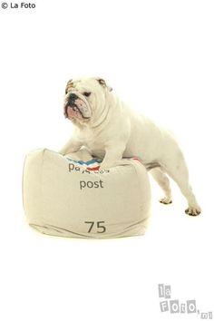 . #dog #great #dane #animal