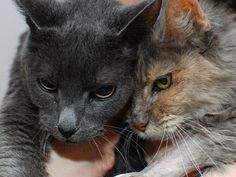 Do you have $1 to give? Help The Grannie Project fund a special adoption center dedicated to senior cats - there's nothing like it in the Philadelphia area - it's time for that to change!