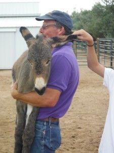 Basic Donkey Training