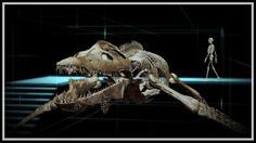 Kronosaurus skeleton