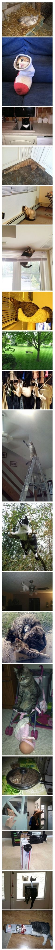 Cat's in awkward places. lol