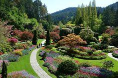 The Sunken Garden May 2014.  #spring #butchartgardens