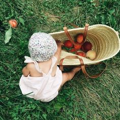 Peach picking.