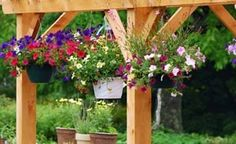 Top 10 plants for hanging baskets