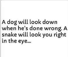 He will look you right in the eye and lie to you, and you will believe him, again.