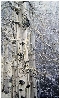 <-- Ceder trees, snow, and an owl, awesome!