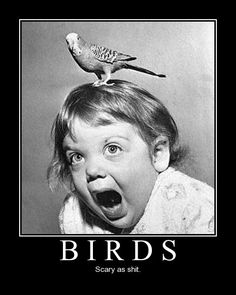 life with birds