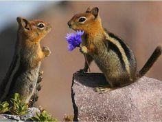 awww, purple flowers, animalsreptil, chipmunk, animaww, ador, amaiz, awh, squirrel