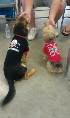Even our dogs are Husker fans :)