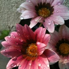 I think flowers are the only pink thing I can tolerate flower, rain drop