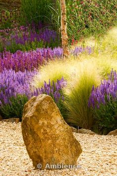 Gravel garden with rock, Salvia Wesuwe, Salvia X Superba, Stipa Tenuissima by leah