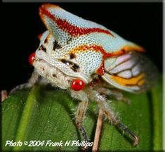 Beautiful Bugs: How to Do Macro Insect Photography
