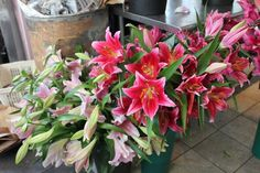 new varities shown, from front to back are: 'Queenfish' (a soft pink with a white throat), 'Avalonia' (a rich deep rose), and 'Bacardi' (a reddish pink).