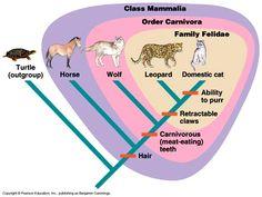 Cladistics Taxonomy