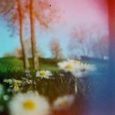 open field of flowers...