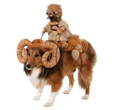Tusken Raider riding a Bantha dog costume
