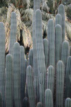 #green #cactus