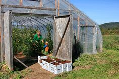 Disease Prevention in High Tunnel Production  - Organic growers are increasingly choosing to grow year-round in high tunnels, in part to avoid the diseases encountered by field crops. Not only do high tunnels provide physical exclusion from airborne disease, but the environmental conditions necessary for the presence of many disease pathogens simply do not occur in high tunnel production.