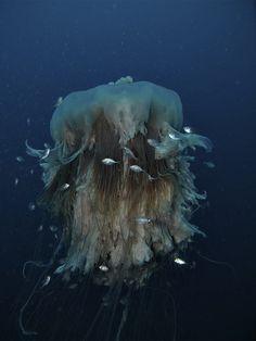 Texture : Jellyfish / Méduse