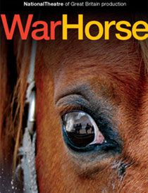 War Horse  (Look at the reflection in his eyeball)