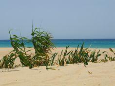 Zahara de los Atunes beach