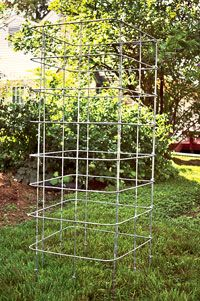 How to build a super sturdy tomato cage, this one so far sounds the best.