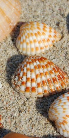 Sea shells   makes me want to be on a Florida beach!