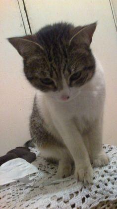 mi querida gatita trini