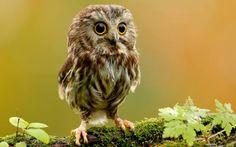 owlet <3   i love baby animals!!!
