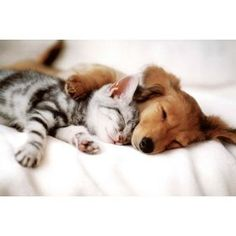 Puppy and kitten having a nice cuddle