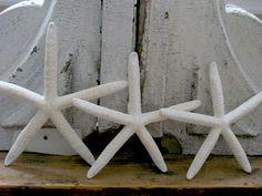 Starfish                                          Walnut & Vine