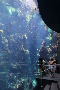 California Academy of Sciences: Aquarium