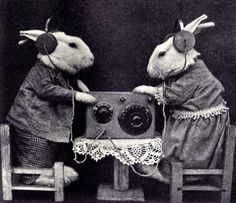 Bunnies love listening to the radio