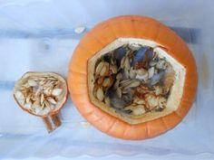 Rotting pumpkin experiment
