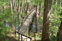 Cypress Swamp on the Natchez Trace Parkway.