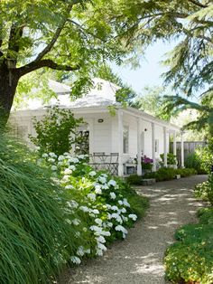 'Blushing Bride' hydrangeas and 'Morning Light' ornamental grasses soften the path to this guesthouse. #garden #landscaping