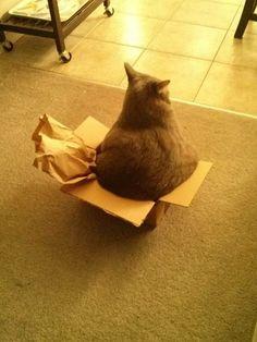 Even if I don't fits - I still sits!!