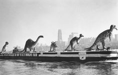 Sinclair Dinosaurs on the Hudson being transported by barge to the New York World's fair ca. 1964 (via Imgur)