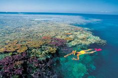 snorkeling at the great barrier reef