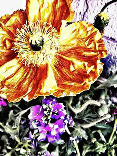 Appsperiment #17: Gilty Posey - Yellow poppy captured in Camera+. Run through the Clarify filter 5 times. Created a ToonPaint version against the original and blended that back into the the clarified version.