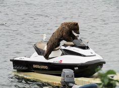 This is a baby bear. On a jet ski. In Alaska. The serendipitous photo was captured by Graham Morrison, owner of Morrison Fishing Guide Service, who shot a series of the cub and its mom playing in the Naknek River on Aug. 5.