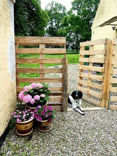 Pallet Fence: 19 Cool Pallet Projects | Pallet Furniture and More | This pallet fence is an easy way to personalize your home | DIYReady.com