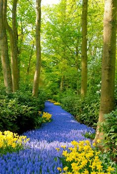 netherland, paths, blue flowers, pathway, color, forest, road, garden, river