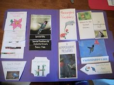 Hummingbird Lapbook Complete from The Arrowood Zoo